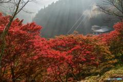 吉野山 七曲坂の紅葉