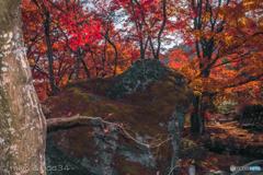宝厳院の獅子岩と紅葉