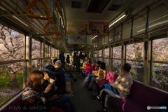 窓の外は桜のトンネル(京福電車 鳴滝駅ー宇多野駅間)
