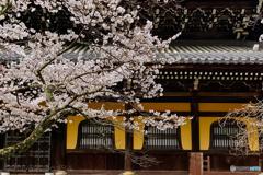 南禅寺の桜