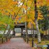 衣笠山地蔵院 (竹の寺)