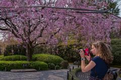 春を写す人
