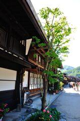奈良井宿 街道の緑