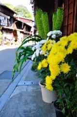 奈良井宿を彩る花々