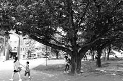 子供たちが遊ぶ木