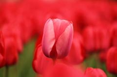 赤いランプ