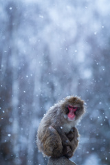雪降る日のこと