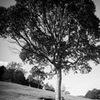 tree loves girl...