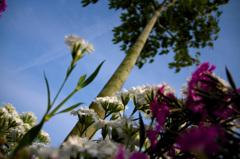 見上げる花壇