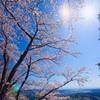 桜越しの我が町