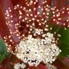 生け垣の花