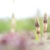 春の背くらべ