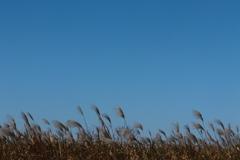 秋の風が吹き抜ける
