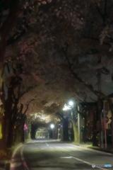 桜並木の夜