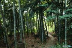 武相荘~竹林