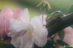 バラとカエル