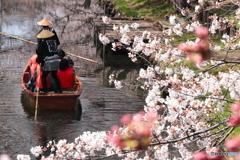 川越・春の舟遊
