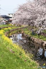 春の小川~This is SPRING in Japan.
