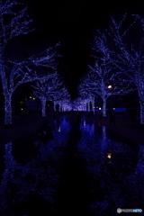 青の洞窟2018 in SHIBUYA #3
