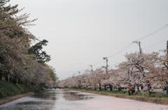 弘前城桜と岩木山