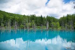 青い池から