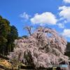 晴れ時々桜吹雪
