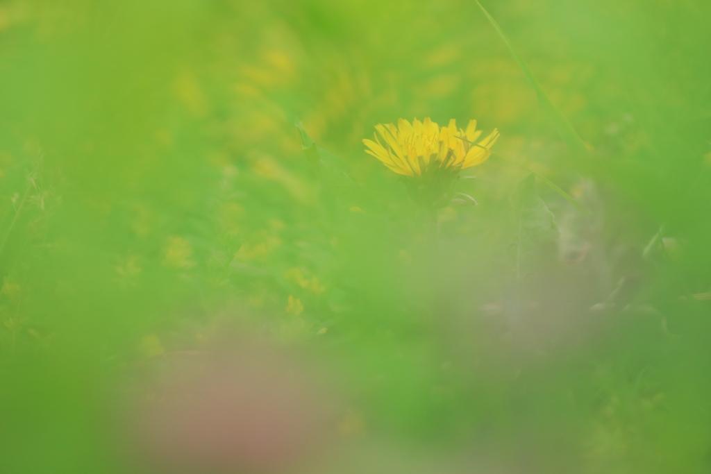 地表の春Ⅱ