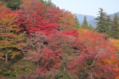 鳥居観音の秋