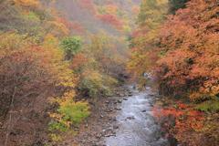 丹波山の秋Ⅴ