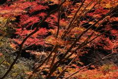 奥多摩むかし道の秋Ⅲ
