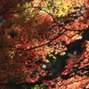秋の彩ⅩⅠ