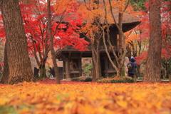 平林寺の秋