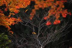 奥多摩むかし道の秋Ⅳ
