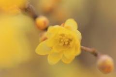 春を待つⅣ