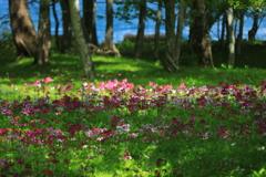 癒しの花園Ⅱ