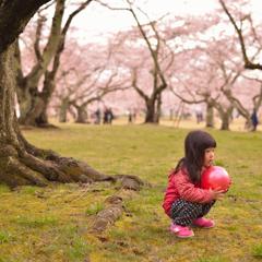 〜 桜の時 〜