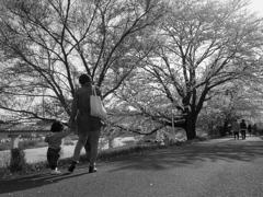 手をつなぐ散歩道