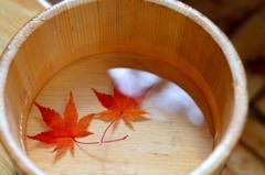 秋の心をお湯に浸して