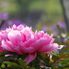 春の散歩花-5