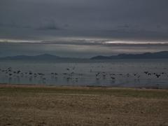 湖面に羽ばたく