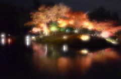 小雨煙る秋池