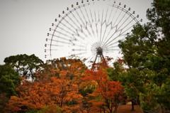 天保山の秋