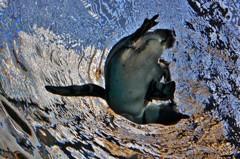 ペンギンターン