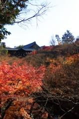 東福寺落葉