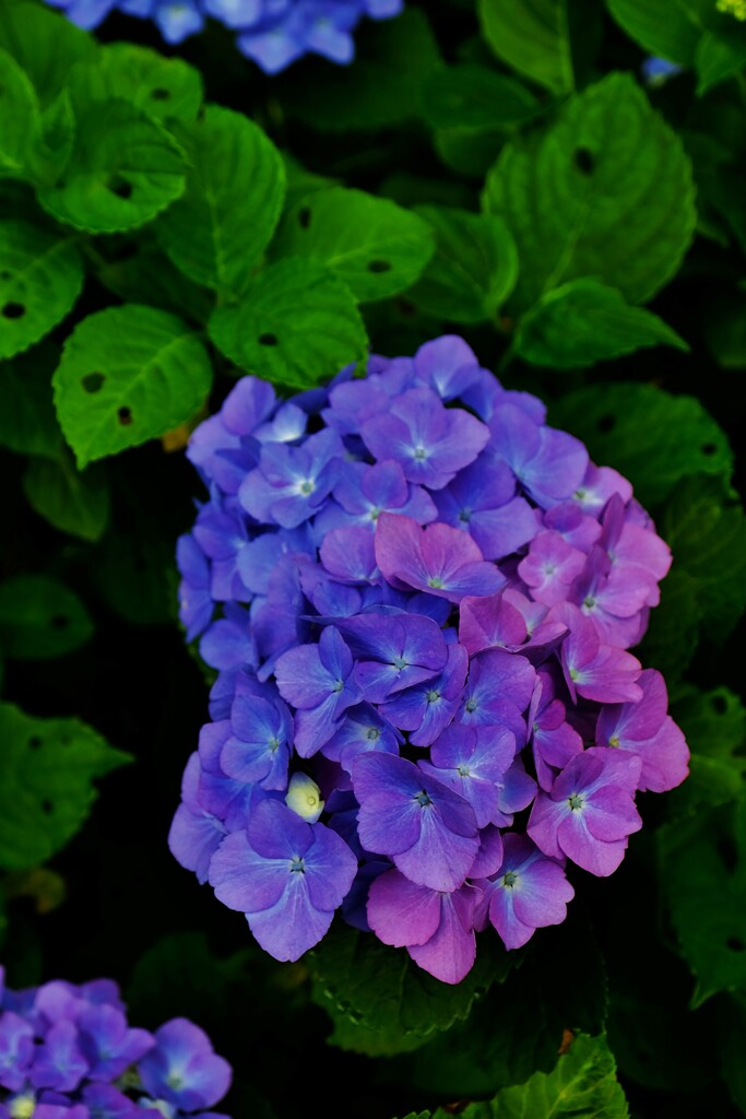 虫食いと紫変