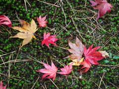 緑に落ち葉