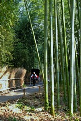 竹林を駆ける