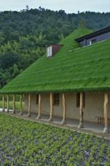 天然芝の屋根