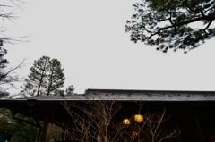 木立と屋根と提灯と