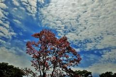 花水木の空